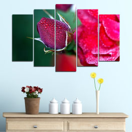 Flowers, Rose, Drops » Red, Pink, Black, Dark grey