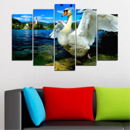 Water, Nature, Birds, Swan » Blue, Black, Gray, Dark grey