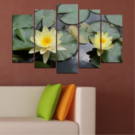 Flowers, Water, Water lily » Green, Black, Gray, Beige, Dark grey