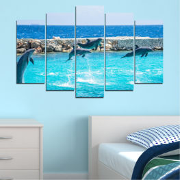 Animal, Sea, Water, Dolphin, Fish » Blue, Turquoise, Gray, Dark grey