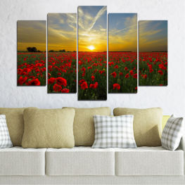Flowers, Sun, Poppy, Field » Red, Green, Brown, Black, Gray