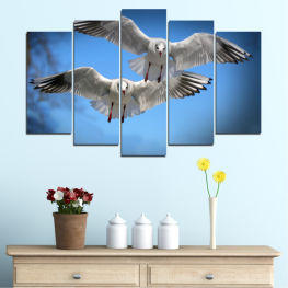 Sky, Birds, Seagull » Blue, Turquoise, Gray, Dark grey