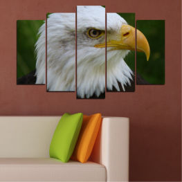 Birds, Portrait, Eagle » Green, Black, Gray, Dark grey