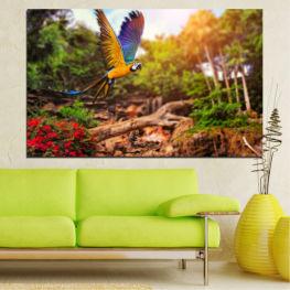 Φύση, Πουλιά, Παπαγάλος » Πράσινος, Πορτοκάλι, Καστανός, Μαύρος