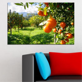 Nature, Garden, Fruits » Green, Orange, Black, White