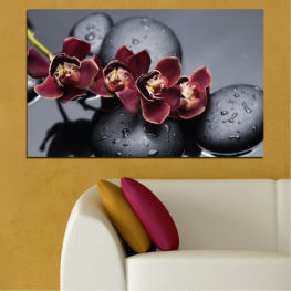 Orchid, Water, Stones, Drops » Red, Pink, Black, Gray, Dark grey
