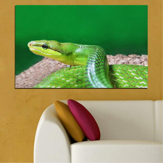 Canvas prints & wall decorative panels - 1 piece №0178 » Green, Gray, Beige » Animal, Snake, Reptile Form #1