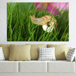 Garden, Flora, Grass, Snail » Pink, Green, Brown, Black, Gray, Beige, Milky pink