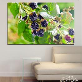 Φύση, Φρούτα, Βατόμουρα » Μωβ, Πράσινος, Γκρί, Μπεζ