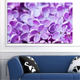 Flowers, Nature, Lilac » Purple, Gray, White