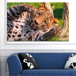 Animal, Portrait, Leopard » Brown, Black, Gray, Beige, Dark grey
