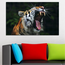 Ζώο, Πορτρέτο, Τίγρη » Καστανός, Μαύρος, Γκρί, Σκούρο γκρι