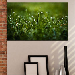 Nature, Drops, Meadow » Green, Black, Dark grey